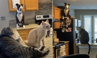 This Family Thought They Brought Home a Dog, Not a Cat!