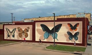 15 Incredible Butterfly Murals Created by Mantra Globally