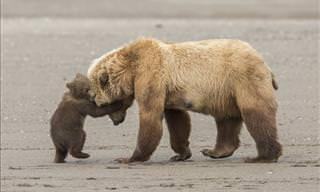 10 of the Best Wildlife Photos of 2017