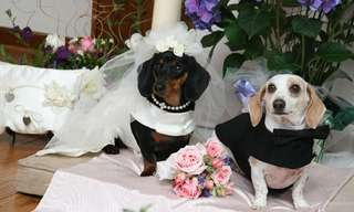 Give These Brides (and Grooms) a Bone - Adorable!
