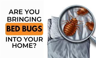 How You Could Be Bringing Bed Bugs Into Your Home
