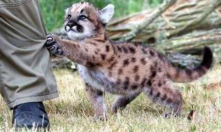 Even Deadly Animals Can Be Adorable!