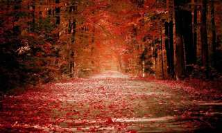 The Legend of The Fall - So Beautiful!