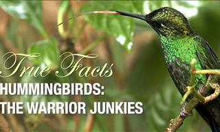 The Hummingbird: Fun Facts about the World's Smallest Bird