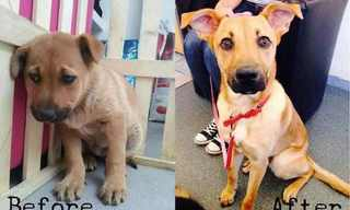 Dog Transformation: Before and After Adoption