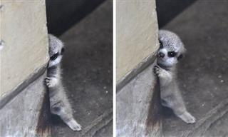 These Pets Are Shy But It Makes Them Even More Adorable!
