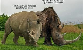 Gallery: A Fascinating Look at 18 Ancient Extinct Species