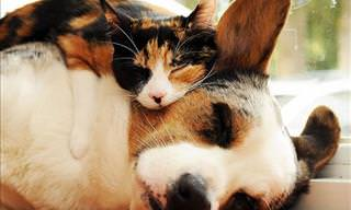 Hilarious Photos of Cats Sleeping on Dogs