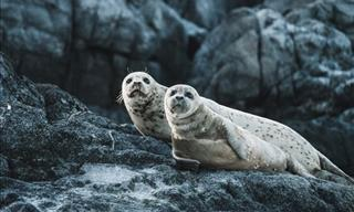 15 Cute Photos That Will Make You Appreciate Seals
