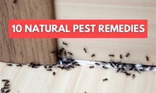 Natural Pest Control - 10 Ways to Get Rid of Various Pests
