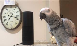 Smart Home, Smarter Parrot