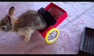 Joe, The Brave Bunny!