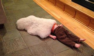 15 Times Kids Were Adorably Bad at Hide and Seek