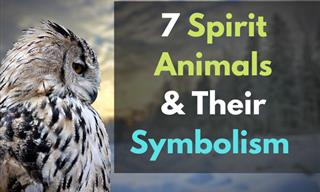 Find Out Your Spirit Animal and What It Represents