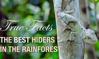 Funny Nature Facts: Deception in the Forest