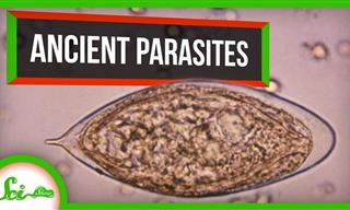 6 Of the Earliest Known Parasites Ever Found