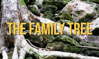 Touching Poetry: The Family Tree