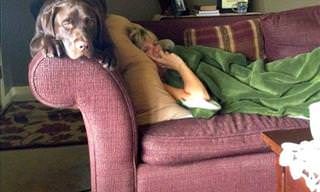 16 Dogs That Think They're Cats