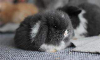 These Round Fluffy Pets Are Just ADORABLE