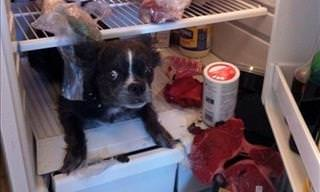12 Dogs Caught Red-Handed