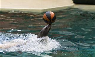 VIDEO: These Animals Can Play Ball Games Like Pros