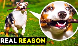 Learn the Meaning Behind These Common Dog Behaviors