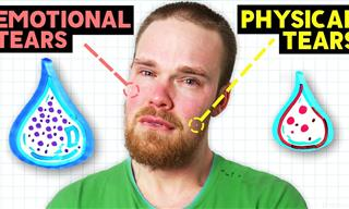 Why Do Humans Cry Out of Emotion?