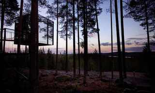 The Swedish Forest Hotel - Amazing!