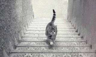 Is This Cat Going Up or Down?