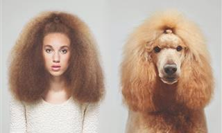 Like Owner, Like Dog: 9 Fun Photos of Dogs & Their Owners