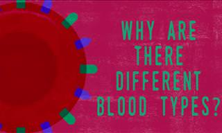 Did You Know: Why Are There Different Blood Types?