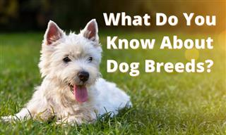Quiz: Can We Ask You About DOG BREEDS?
