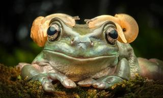Tiny Frogs With Tiny Props - Adorable Photos!