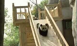 The Panda Playground - Adorable!