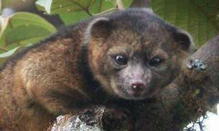 10 New Animal Species from 2014