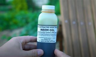 Why Every Gardener Should Have a Bottle of Neem Oil