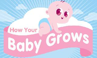 A Guide to a Baby's Growth