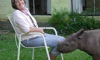 Mommy, Can I Have a Rhino?