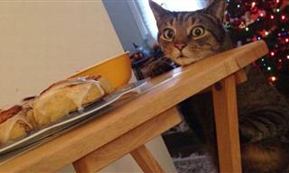 19 Hilarious Photos Showing Cats Being Jerks