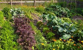 15 Tips for a Flourishing Vegetable Garden
