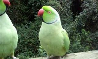 Watch This Little Birdy Tell Little Birdy Love Secrets