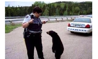 These Funny Photos Sum Up Canada With Zero Words Needed