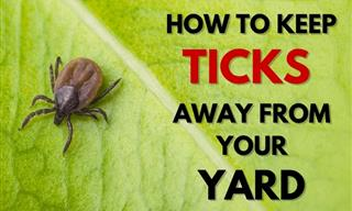 7 Useful Tips for Preventing Ticks in the Yard and Garden