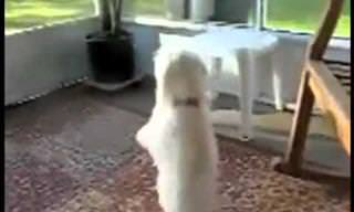 These Dancing Dogs Will Make Your Day