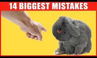 Pet Care: Common Mistakes That Rabbit Owners Often Make