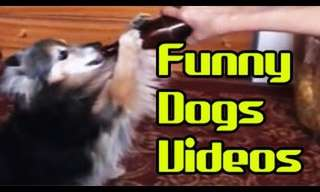 Dogs Sure Make Us Laugh - Funny Compilation!