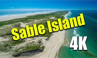 Video: The Beauty of Sable Island