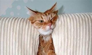 17 Eccentric Cats To Make You Smile