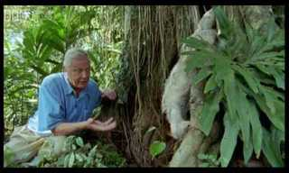 David Attenborough: Saying Boo to a Sloth!