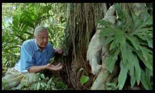 David Attenborough: Saying Boo to a Sloth!